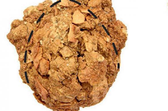 Сибирские археологи впервые нашли окаменелое яйцо динозавра. 379086.jpeg
