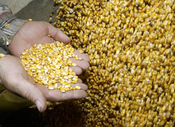 Сельское хозяйство чуть не погубило человечество. Сельское хозяйство чуть не погубило человечество