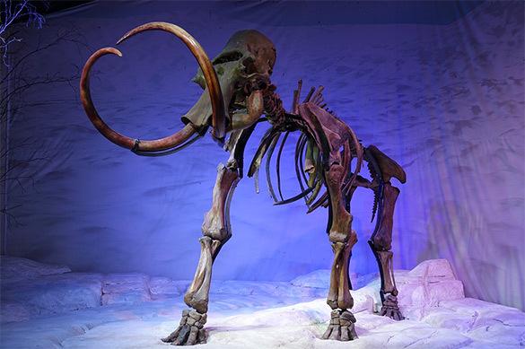 В Якутии на огороде нашли бивни мамонта