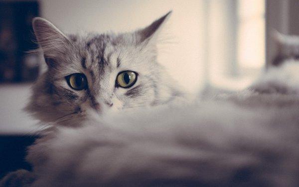 12 интересных фактов из жизни кошек. Ласковая кошка