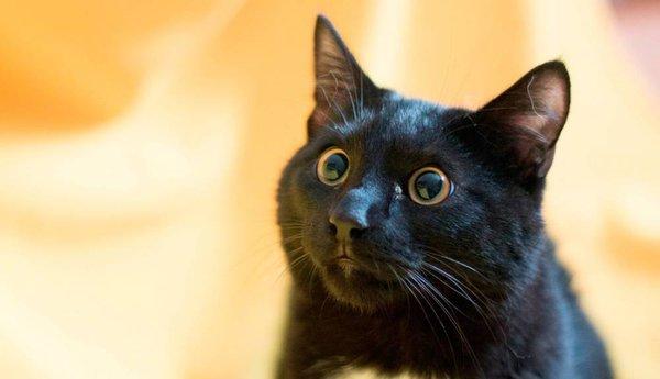 12 интересных фактов из жизни кошек. Кошка