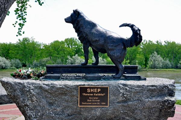 Памятники преданности, любви и самоотверженности. Памятник собаке Шеп