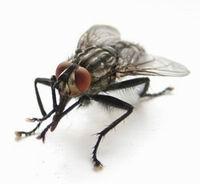 Убитая Обамой муха - знак преодоления кризиса