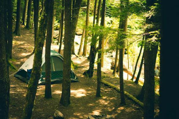 От кредитов начали убегать в лес и жить годами в шалаше. 390102.jpeg