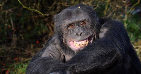 Никому не нужны: больше тысячи животных из Аргентинского зоопарк