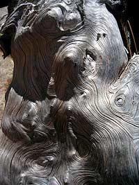 На смену пластмассе приходит жидкая древесина