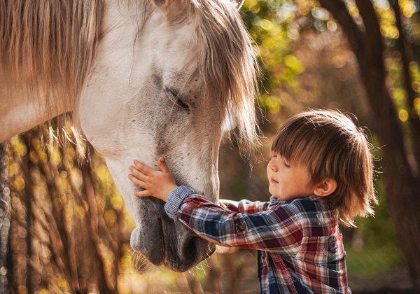 Плохое настроение? Пообщайтесь с лошадью и оно улучшится. Иппотерапия