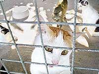 У жительницы Пенсильвании отняли 115 кошек