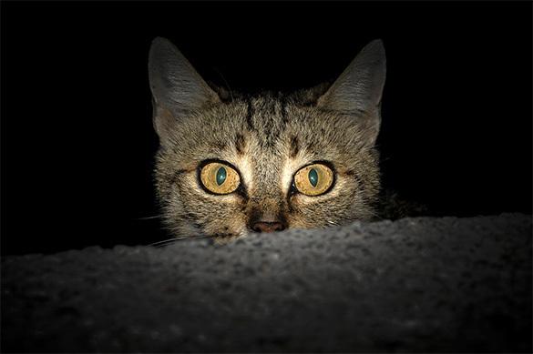 Кошачий парикмахер в США ловит и бреет котов