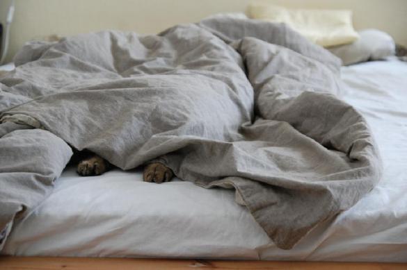 Совам на заметку: недосып не только убивает, но и спасает. 388109.jpeg