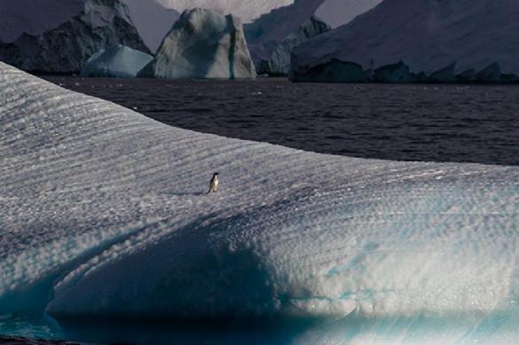 Ученые бьют тревогу: Антарктида тает, многих смоет. 388113.jpeg