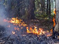 пожар. 243116.jpeg