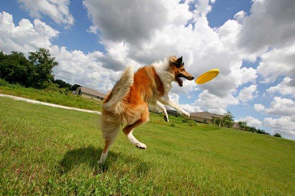 Спортивной собаке – спортивного хозяина: Чемпионат России по дог-фризби. Соревнования по дог-фризби