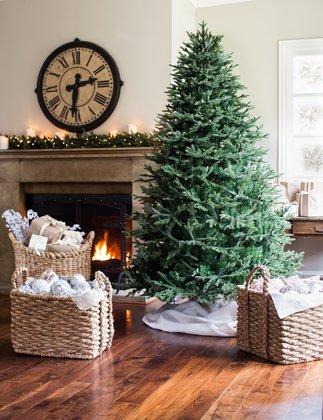 Пихта Фразера - лучшее новогоднее дерево. Пихта Фразера