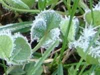 Апрельские заморозки обошлись Ставрополью в полтора миллиарда