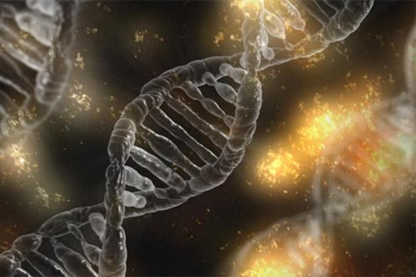 Российские биологи обнаружили в клетках мускулов белковые клубк