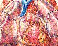 Ученые создали искусственное сердце из тараканьего