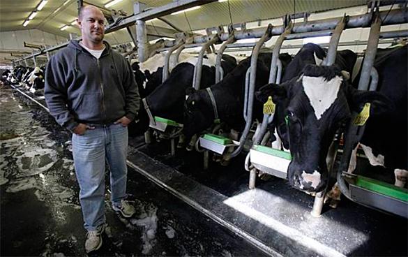 Западные компании после российского эмбарго переносят производство в РФ. молоко, производство, фермеры, коровы