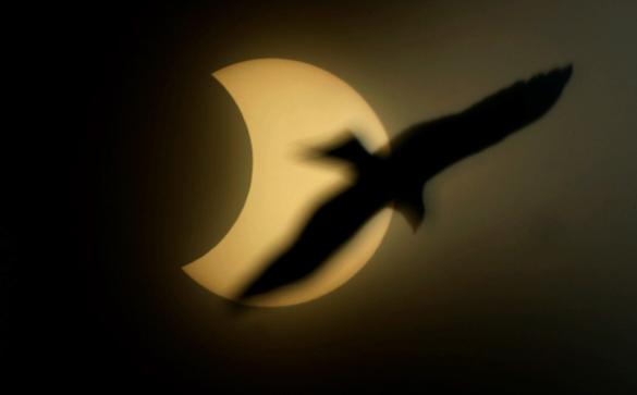 Земляне cегодня смогут увидеть полное солнечное затмение. Солнечное затмение