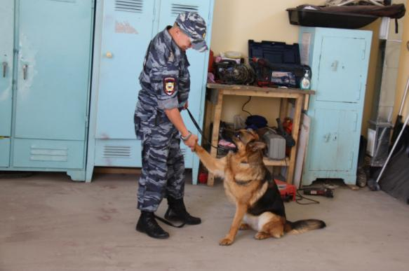 Сахалинские полицейские тащили собаку за машиной для