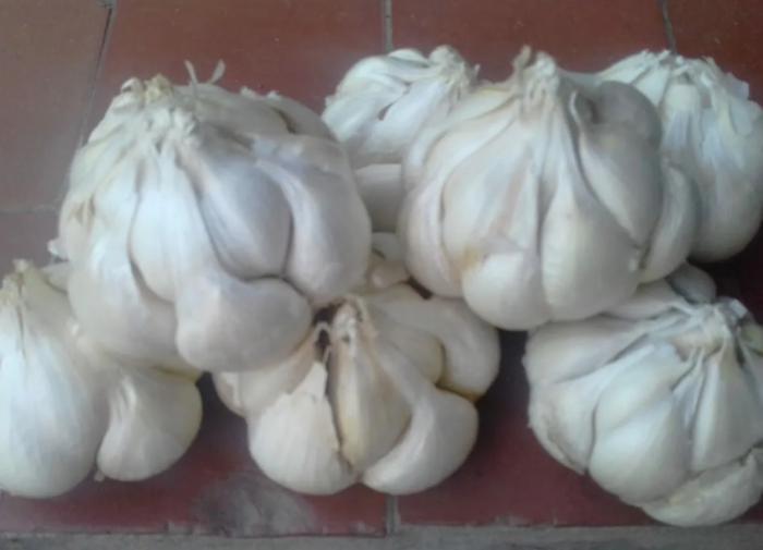 Рубль может стать единой расчетной единицей ШОС