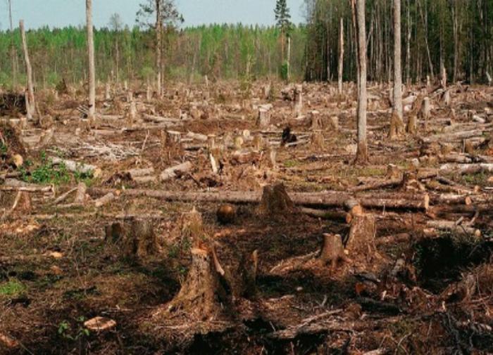 Прокуратура пытается вернуть незаконно проданные 8 лесных участков во Владимирской области