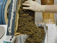 На ГРЭС в Забайкалье найден мешок марихуаны. 250133.jpeg