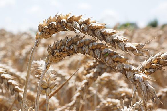 Михаил ЩЕТИНИН – об аграрном буме в России, несмотря на контрсан