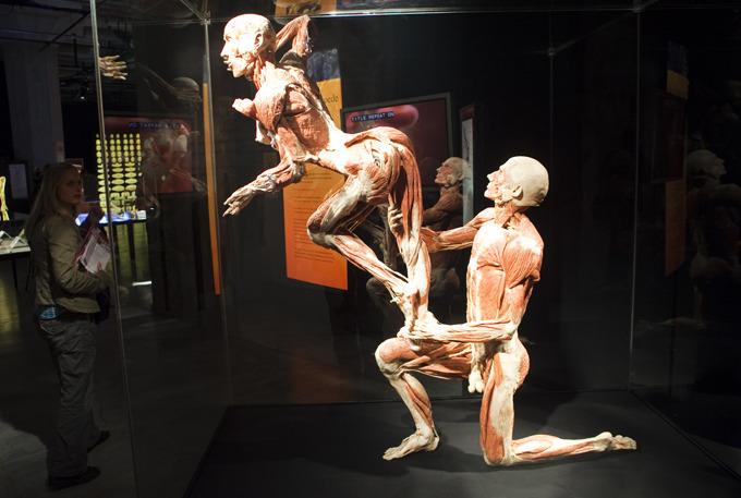 Российским медикам представят роботов, реагирующих на лечение, и модели человеческого тела из белка.