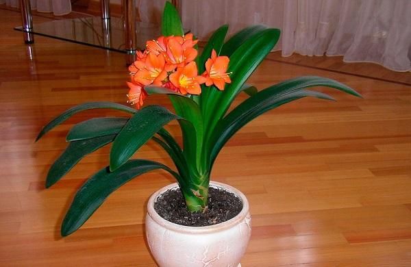 Садовые и комнатные тенелюбивые цветы. 404135.jpeg