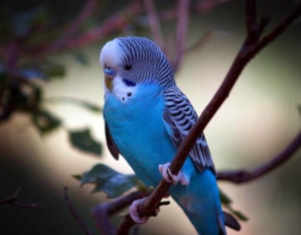 10 вещей, которые вам нужно знать, прежде чем заводить птицу (часть 1). 394137.jpeg