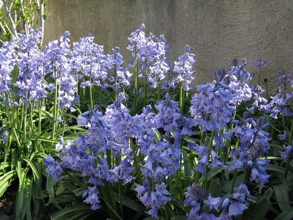 Садовые и комнатные тенелюбивые цветы. 404137.jpeg