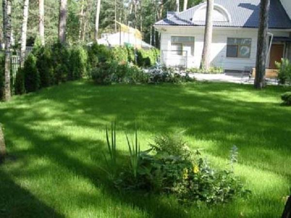 Садовые и комнатные тенелюбивые цветы. 404138.jpeg
