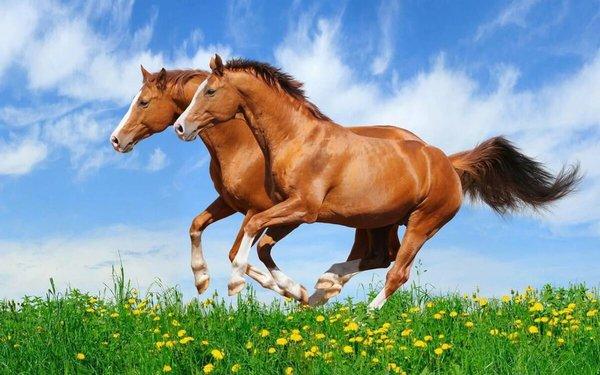 Новые методы диагностики и лечения болезней лошадей. Здоровая лошадь