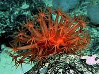 Ученые нашли неизвестные ранее виды подводной фауны