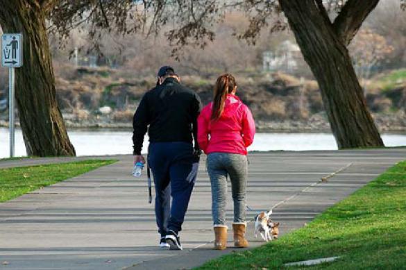 Прогулки с собаками могут быть опасны для здоровья. 395141.jpeg