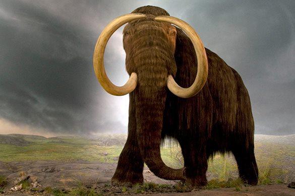 Кости мамонта выдали истинный возраст человечества