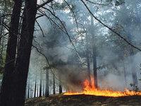 Шестеро из 14 десантников выжили на лесном пожаре в Туве. 260146.jpeg
