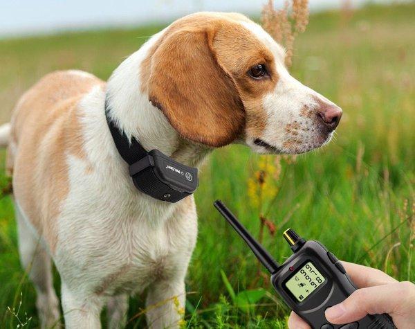 Что такое электронный ошейник и как его использовать. Собака в электронном ошейнике