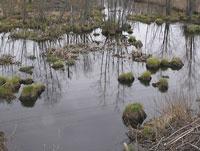 Пропавшая в Подмосковье девочка утонула в болоте