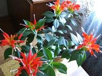 Комнатные растения поглощают вредный озон из воздуха помещений