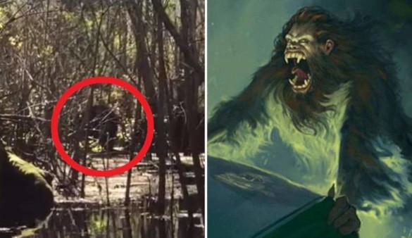 В штате Флорида удалось заснять легендарную скунсовую обезьяну. 394149.jpeg