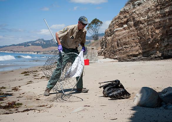 Власти Калифорнии ввели режим ЧС из-за нефтяного разлива. нефтяной разлив, экология, загрязнение