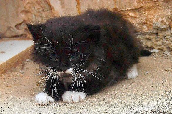 Женщину в Новосибирке не будут судить из-за котенка