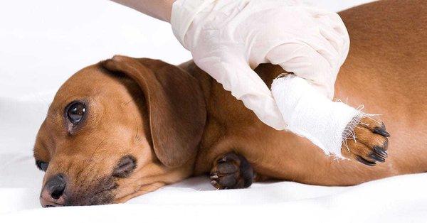 Болезни опорно-двигательной системы у животных. Болезни опорно-двигательной системы у животных