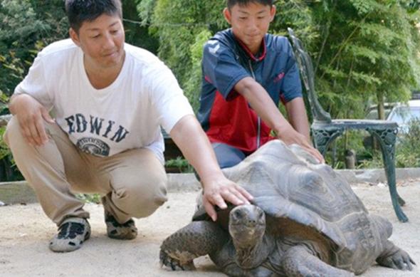 Черепаха бежала из зоопарка со скоростью 10 метров в день. Черепаха бежала из зоопарка со скоростью 10 метров в день
