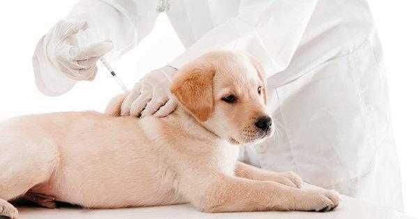 Болезни опорно-двигательной системы у животных. Лечение собак