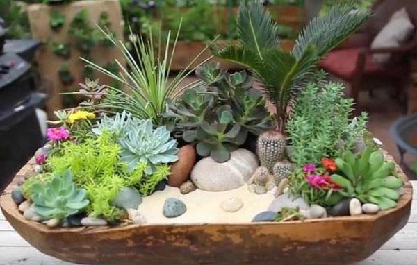 Пять необычных суккулентов для вашего зимнего сада. 404156.jpeg