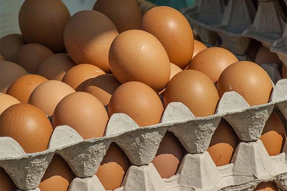 В России усилен лабораторный контроль ввозимых их Европы яиц. В России усилен лабораторный контроль ввозимых их Европы яиц