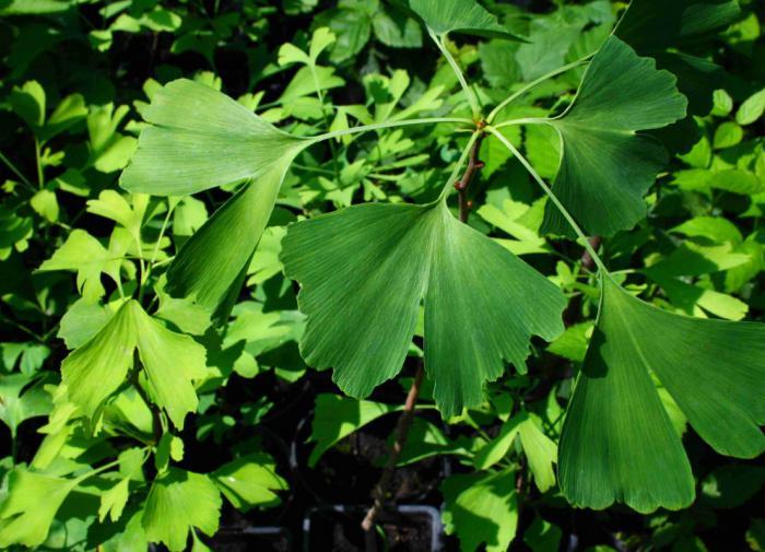 Мишель Обама заполнила Белый дом современной живописью